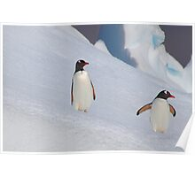 Gentoo Penguins On The Slippery Slope Poster
