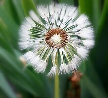 Dandelions to be by Lissie EJ