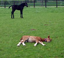 Taking a nap on soft gras by Heidi Mooney-Hill