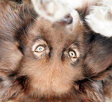Puppy Love by Jenny Dean