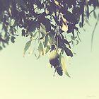 Leaves fluttering on the summer breeze by Linda Lees