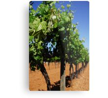 Griffith Winery Metal Print