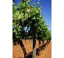 Griffith Winery Photographic Print