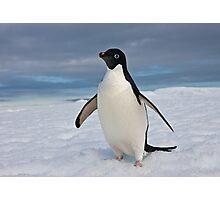 Adelie Penguin seeks Fame Photographic Print