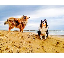 Cold Collie, cludy Photographic Print