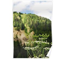 Friulian Dolomites with Foreground Wild Flower Poster