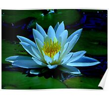Water Lily.....Waldport, Oregon Poster