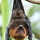 Rodrigues Fruit Bat by Mark Hughes
