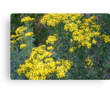 """Washington Wildflowers"" Canvas Print"