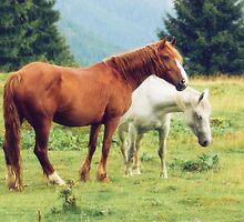 Romanian horses by Dominika Aniola