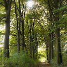 Beech lane in autumn by 7horses