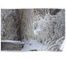 Trees covered in Ice Poster