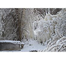 Trees covered in Ice Photographic Print