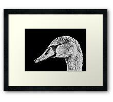 Swan Black & White Framed Print