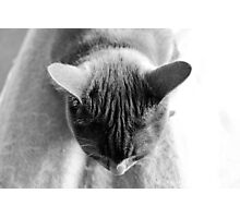 Head Strong Photographic Print