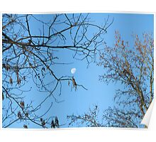 Moon Through The Trees Poster