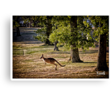 Skippy at Seawinds Canvas Print