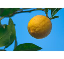 Hanging winter lemon Photographic Print