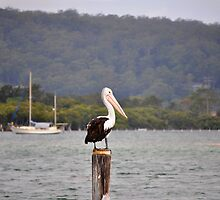PELICAN ON POST by David McDougall