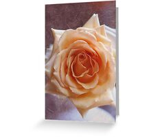 Romantic Rose in peach / orange. Greeting Card