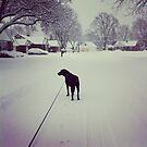 Winter Walk with Marley by jegustavsen
