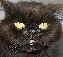 """""""Yoda Cat"""" by BlackDove1128"""