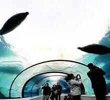 Seal adventures by rbestphoto