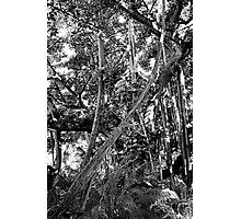 IM's Last Stand Study 3  Photographic Print