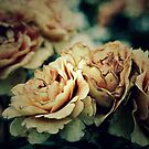 Old Roses. by Jeanette Varcoe.
