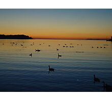 Canada Geese in the Sunset Photographic Print