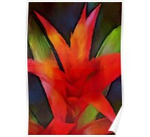 thinking of bromeliad Poster