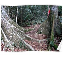 National Park Rain forest Poster