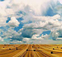 Marshmallows by Jennifer Gibson