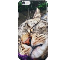 The Outside Office (a 365 with my cats) iPhone Case/Skin