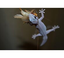 Macro Lizard Eating Insect Photographic Print