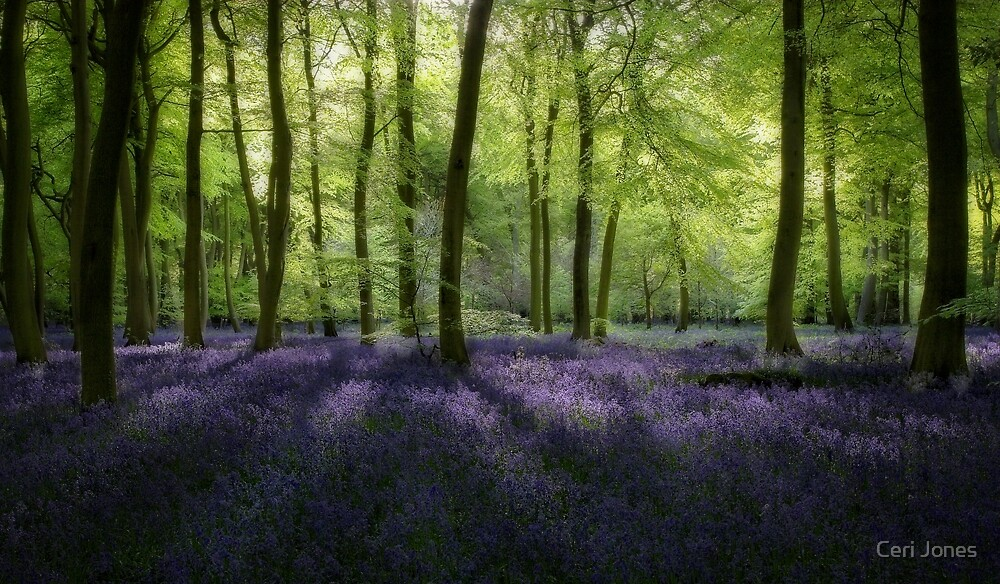 Evening Bluebells by Photokes
