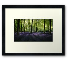 Evening Bluebells Framed Print