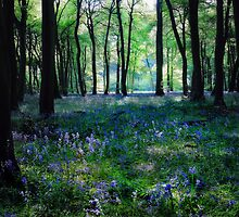 Spring Bluebells by Photokes
