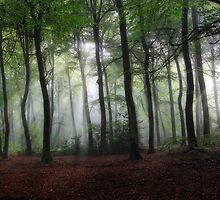 Summer morning Woods by Photokes