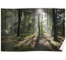 Sunlight in Summer Woods Poster