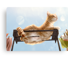 My Neighbour's Cat Canvas Print