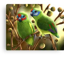 Double-eyed fig parrots Canvas Print