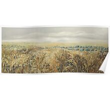 Agricultural landscape. Wheat Fields and olive trees  Poster