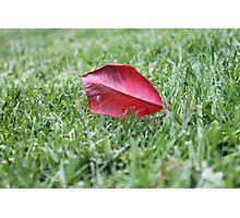 Broken Blades Photographic Print