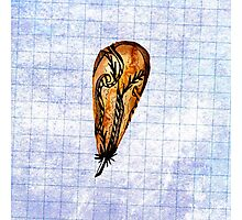 Brown Feather On Graph Photographic Print