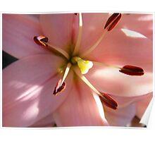 Macro Lily Poster