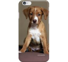 Playful Puppy iPhone Case/Skin