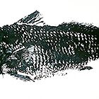Gyotaku fish rubbing, Florida Redfish, mono-chromatic by alan barbour