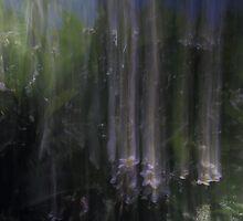 Frangipani raining. by Elisabeth Thorn