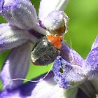 Fuzzy Lady Beetle by KiriLees